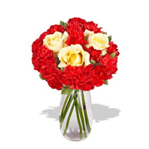 Carnation Delight: Just Because