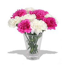 10 Pink n White Carnations in Vase: Send Anniversary Gifts to Vancouver