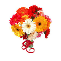 12 Multi Color Gerberas Bouquet: Anniversary Gifts Vancouver