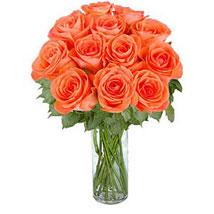 Orange Roses: