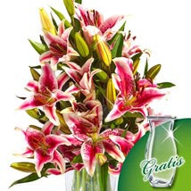 10 pink Stargazer Lilies in a bunch: Send Gifts to Frankfurt