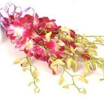 Orchids INDO: Indonesia