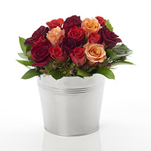 A Bucket of Roses