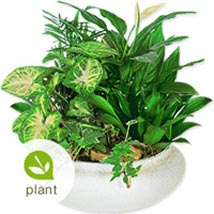 Greenbelt SUAR: Flowers to Saudi Arabia