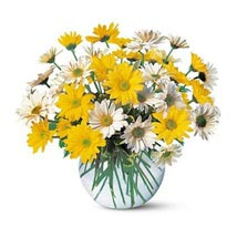 Dashing Daisies: