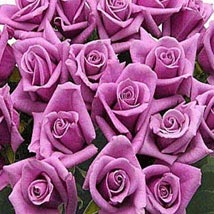 100 Long Stem Lavender Roses: Send Flowers to Kansas City
