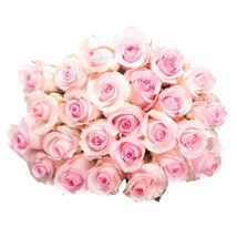 25 Long Stem Pink Roses: Birthday Gifts Raleigh