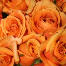 50 Long Stem Orange Roses: Send Flowers to Kansas City