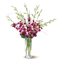 Dendrobium Orchids: Father's Day