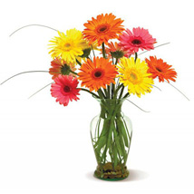 Happy Gerberas: Send Fathers Day Gifts to USA