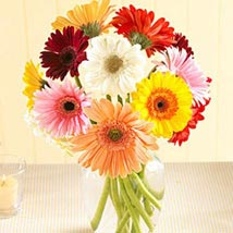 Multi Color Gerberas in Vase: Flowers to Kansas City