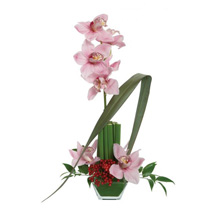 Opulent Orchids: Father's Day